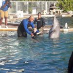 August shaking hands with Dolphin